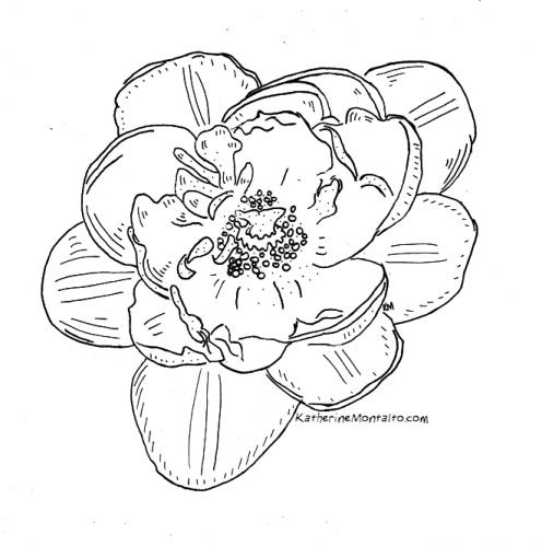 2020 04 19 flowers BW