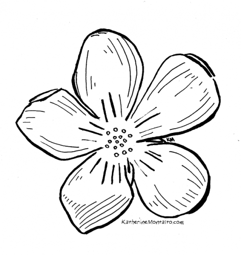 2020 04 29 flowers BW