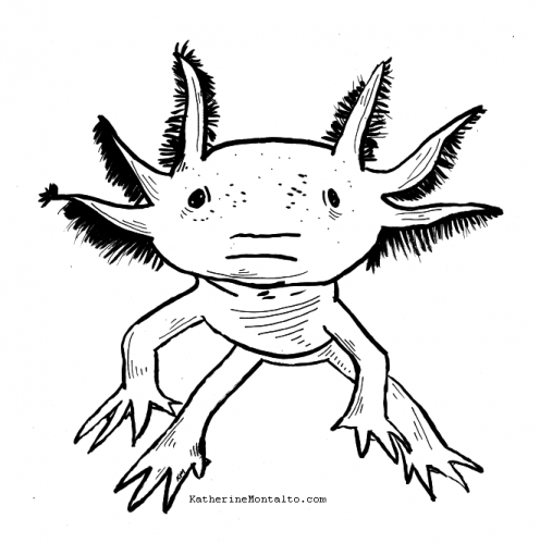 2020 08 25 sea creatures BW axolotl