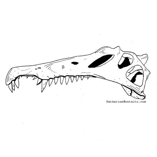 2020 10 10 dinotober Spinosaurus skull