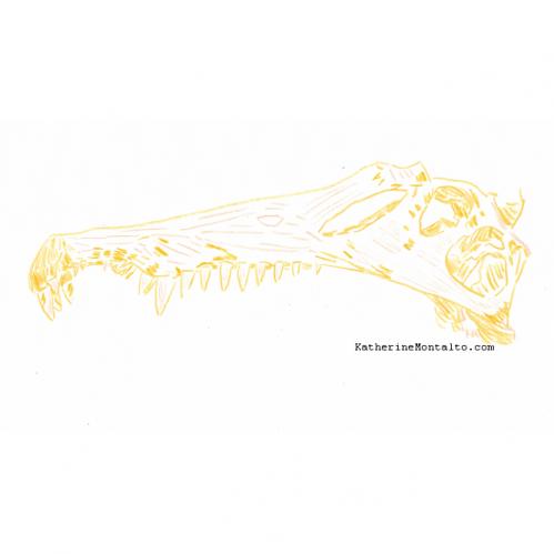 2020 10 18 dinoctober in color Spinosaurus skull