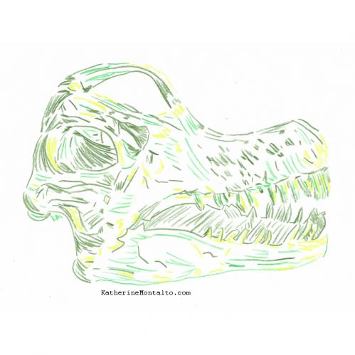 2020 10 20 dinoctober in color Diplodocus skull