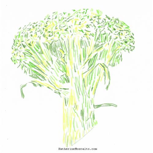 2021 05 vegetables in color broccoli